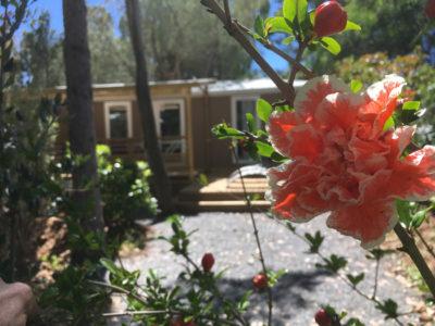 Camping met luxe stacaravan met tuin
