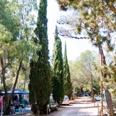 Staanplaatsen 'Basic' - Caravans & campers