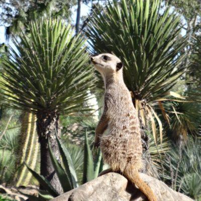 De tropische dierentuin van La Londe