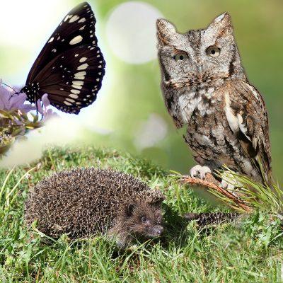 Een natuur camping met vele fauna