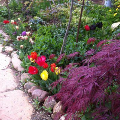 De botanische tuin van Le Réal – Puget-ville