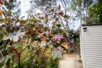 Pods in de schaduw Natuur Provence